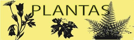 Fotografías de plantas